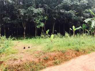Residential Land for Sale in Kottayam, Kottayam, Divanpuram