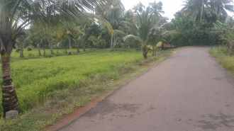 Agricultural Land for Sale in Alleppey, Kuttanad, Thakazhy, Chirayakom