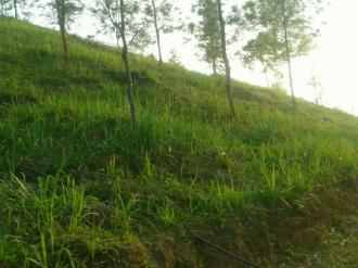 Residential Land for Sale in Palakad, Attappady, Attappadi, Ommala