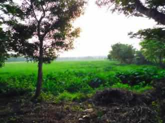 Residential Land for Sale in Kollam, Kollam, Mukhathala