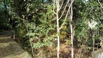 Residential Land for Sale in Ernakulam, Angamaly, Angamaly, Elavoor