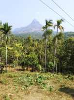 Residential Land for Sale in Wayanad, Sulthan bathery, Ambalavayal, Ambalavayal