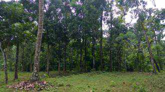 Residential Land for Sale in Ernakulam, Muvattupuzha, Nellad