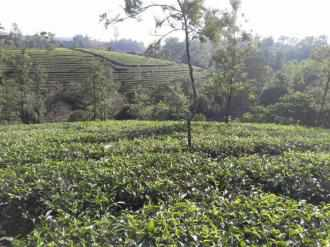 Residential Land for Sale in Idukki, Vagamon, Vagamon