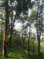 Agricultural Land for Sale in Idukki, Idukki, Idukki, yandayar