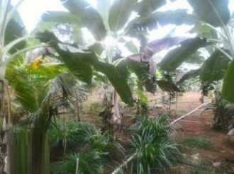 Residential Land for Sale in Kottayam, Kadathuruthy, Manjoor, Manvettom