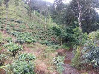 Residential Land for Sale in Idukki, Vagamon, Vagamon, Chottupara