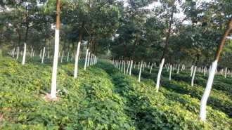 Agricultural Land for Sale in Chikkamagaluru, Sringeri, Sringeri