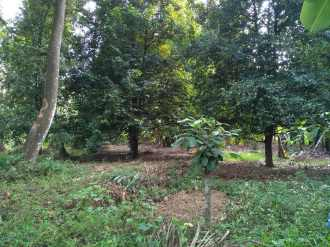 Residential Land for Sale in Ernakulam, Kalady, Kalady, KANJOOR