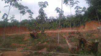 Residential Land for Sale in Kottayam, Kadathuruthy, Kaduthuruthy
