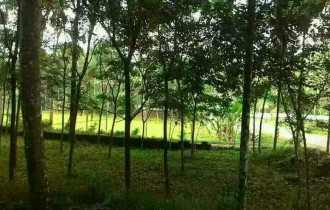 Residential Land for Sale in Ernakulam, Piravom, Piravom, maneed