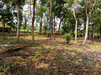 Residential Land for Sale in Kottayam, Kottayam, Arpookara