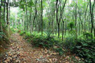 Residential Land for Sale in Pathanamthitta, Pandalam, Thumpamon, Keerukuzhi