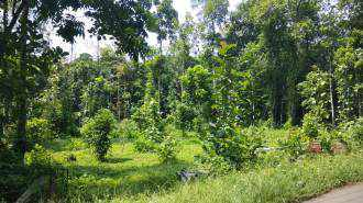Residential Land for Sale in Kottayam, Pala, Pravithanam