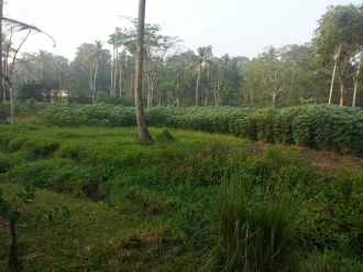 Residential Land for Sale in Kottayam, Vaikam, Vaikam
