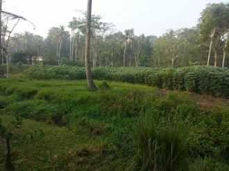 Residential Land for Sale in Kottayam, Vaikam, Vaikam