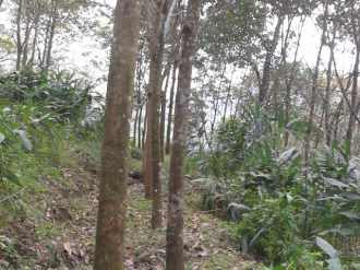 Agricultural Land for Sale in Pathanamthitta, Konni, Thannithode, seethathode