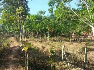 Residential Land for Sale in Pathanamthitta, Adoor, Adoor, Mithrapuram
