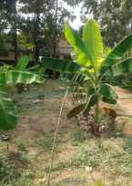 Residential Land for Sale in Ernakulam, Aluva, Desam, kottai