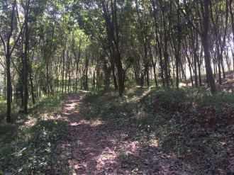 Agricultural Land for Sale in Kanyakumari, Kuzhithurai, Kuzhithurai, marthandam