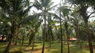 Commercial Land for Sale in Kozhikode, Vatakara, Thiruvallur