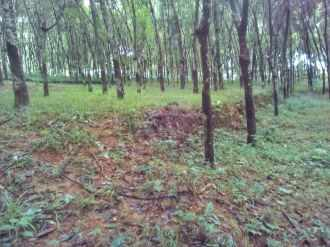 Residential Land for Sale in Kottayam, Ettumanoor, Cheruvandoor
