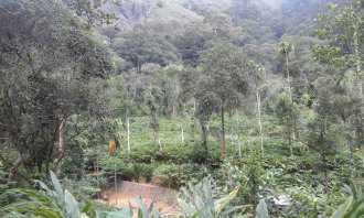 Commercial Land for Sale in Idukki, Peerumade, Manjumala, Sathrame