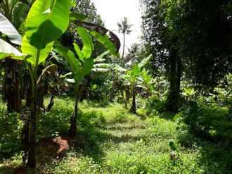 Residential Land for Sale in Ernakulam, Perumbavoor, Allapra, Puthooran Kavala, Valayanchirangara