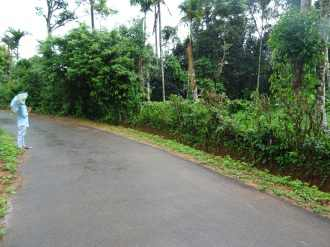 Agricultural Land for Sale in Wayanad, Kalpetta, Meppadi, Rippon