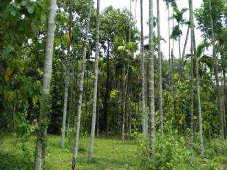 Agricultural Land for Sale in Kozhikode, Thamarassery, Kodenchery, Kodenchery