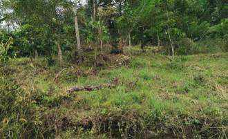 Residential Land for Sale in Idukki, Kumily, Kumily, Anavilasam