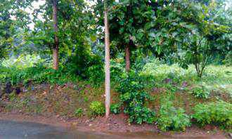 Residential Land for Sale in Kottayam, Pala, Pala, Pala -  Thodupuzha highway