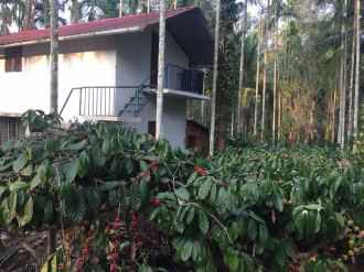 Agricultural Land for Sale in Wayanad, Pulpally, Padichira