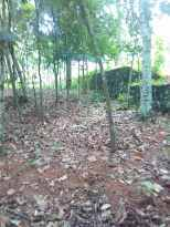 Residential Land for Sale in Pathanamthitta, Adoor, Peringanadu