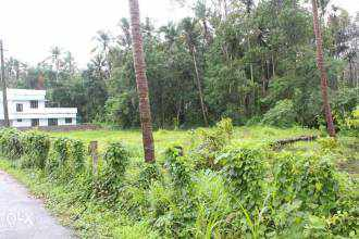Residential Land for Sale in Thrissur, Mannuthy, Mannuthy, Chirakkekode