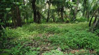 Residential Land for Sale in Kozhikode, Vatakara, Madapalli, Nadapuram Road