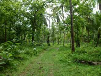 Residential Land for Sale in Thrissur, Mannuthy, Poochetty, Chalampadam, Near St. George Jacobite Syrian Church