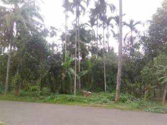 Residential Land for Sale in Wayanad, Panamaram, Panamaram, Chittaloorkunnu