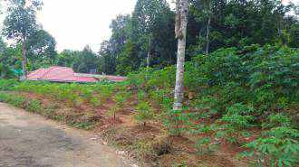 Residential Land for Sale in Kottayam, Ponkunnam, Ponkunnam