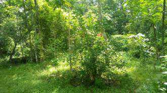 Residential Land for Sale in Ernakulam, Kolenchery, 10th mile, puthencruz, Kinginimattom, Kakkattupara