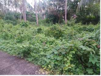 Residential Land for Sale in Thrissur, Guruvayur, Mattom, Market road.