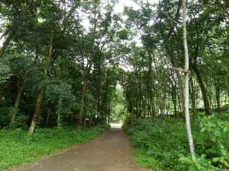 Residential Land for Sale in Kottayam, Kottayam, Amayannoor, Panthanmackal vayalil
