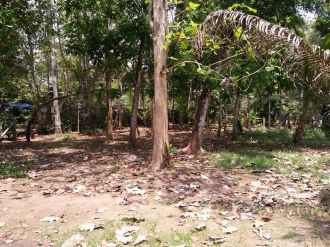Residential Land for Sale in Pathanamthitta, Thiruvalla, Parumala