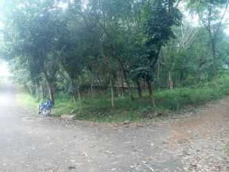 Agricultural Land for Sale in Trivandrum, Thiruvananthapuram, Kattakkada, kattakode