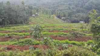 Commercial Land for Sale in Pathanamthitta, Kozhencherry, Kuzhikkala, CHARALKUNNU