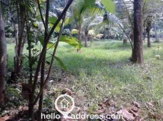 Residential Land for Sale in Kottayam, Thalayolaparambu, Kanjiramattom, Vadakara