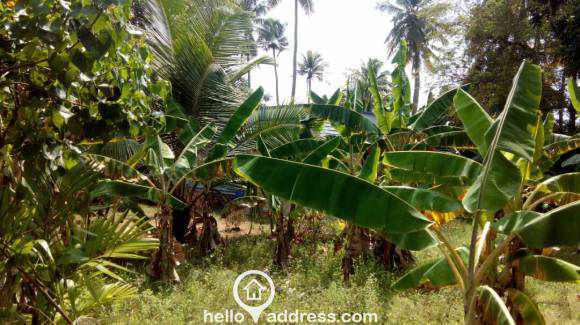 Commercial Land for Sale in Alleppey, Kuttanad, Nedumudi