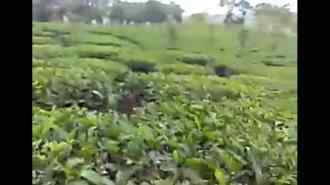 Commercial Land for Sale in Idukki, Vagamon, Vagamon, Town