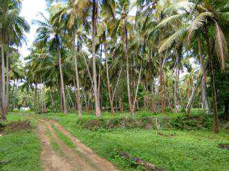 Agricultural Land for Sale in Palakad, Chittur, Kozhinjampara
