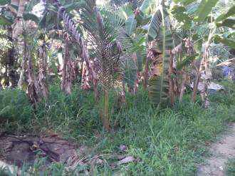 Residential Land for Sale in Ernakulam, Chottanikkara, Thiruvamkulam, Siva Temple